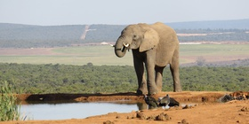 Experiences - African Elephants