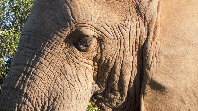 African Elephant at Addo Elephant National Park with A&A Adventures