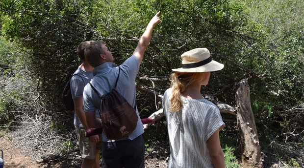 Indigenous forest walk in Somerset East with A&A Adventures in South Africa