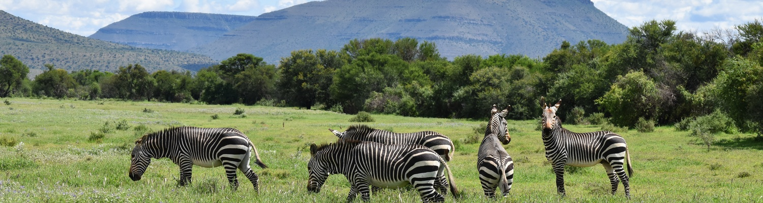 Scenery and Mountain Zebras at the Mountain Zebra National Park with A&A Adventures